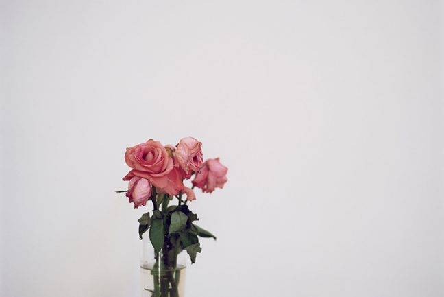 In/Out - Julia Schauenburg: 52 bunches of flowers I bought myself